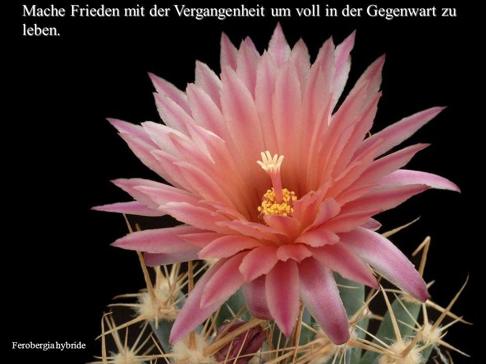 Ferobergia hybride Mache Frieden mit der Vergangenheit um voll in der Gegenwart zu leben.