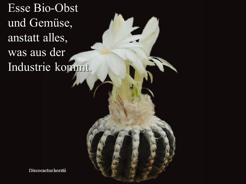 Discocactus horstii Esse Bio-Obst und Gemüse, anstatt alles, was aus der Industrie kommt.