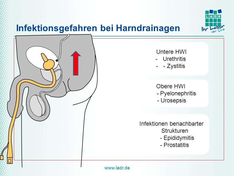 www.ladr.de Infektionsgefahren bei Harndrainagen Untere HWI -Urethritis -- Zystitis Obere HWI - Pyelonephritis - Urosepsis Infektionen benachbarter Strukturen - Epididymitis - Prostatitis