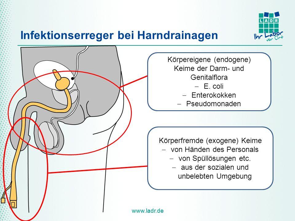 www.ladr.de Infektionserreger bei Harndrainagen Körpereigene (endogene) Keime der Darm- und Genitalflora  E. coli  Enterokokken  Pseudomonaden Körp