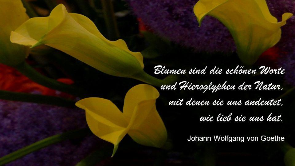 Düfte sind wie die Seele der Blumen, man kann sie fühlen, selbst im Reich der Schatten. Joseph Joubert
