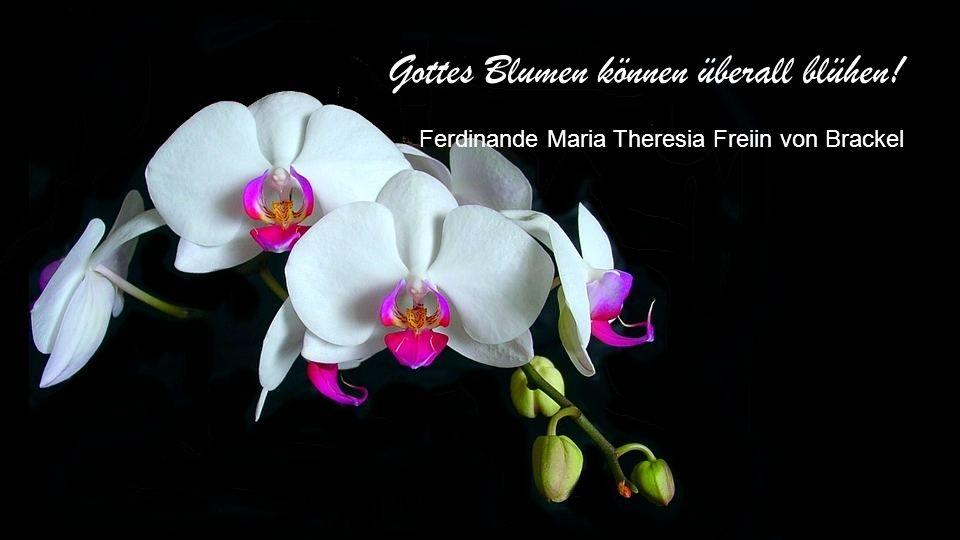 Blumen sind die schönen Worte und Hieroglyphen der Natur, mit denen sie uns andeutet, wie lieb sie uns hat. Johann Wolfgang von Goethe