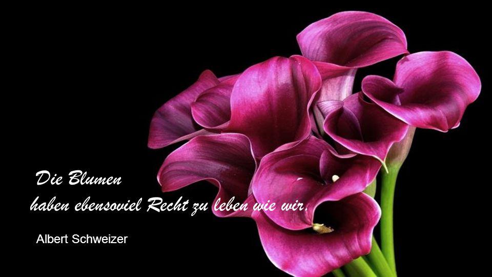 Ach, wir wissen, dass die Blumen welken schon nach kurzer Frist, doch Erwartung ihrer Blüte unsres Herzens Leben ist. Meiji-ishin Tenno