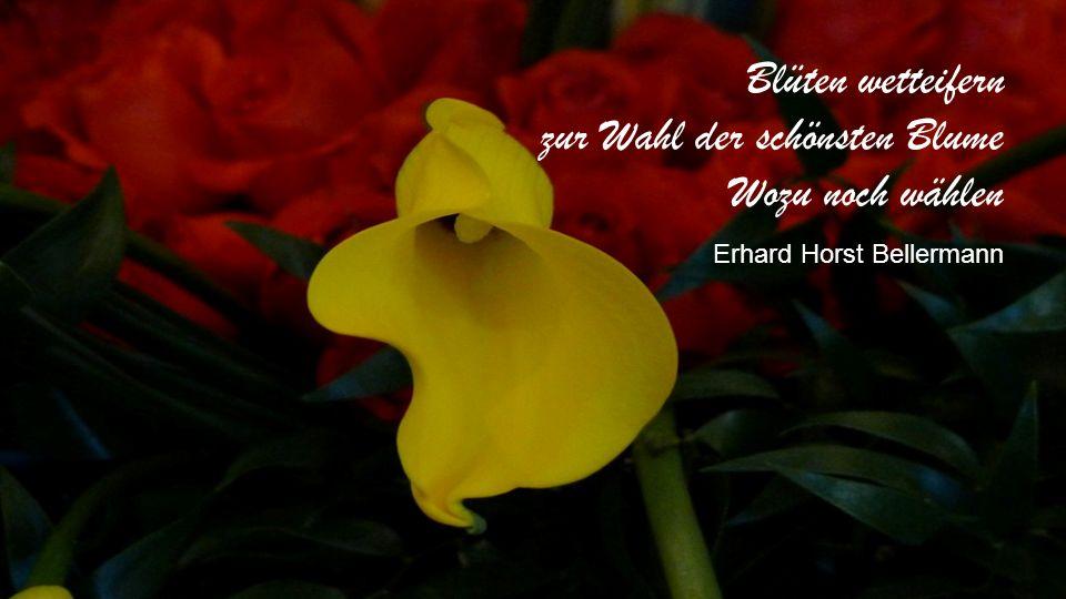 Was eine Blume braucht, ist die Kraft des Stengels, der sie trägt, der sie in Wind und Wetter festhält und der sie der Sonne entgegenstreckt. Phil Bos