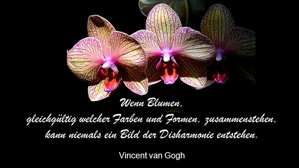 Blüten wetteifern zur Wahl der schönsten Blume Wozu noch wählen Erhard Horst Bellermann
