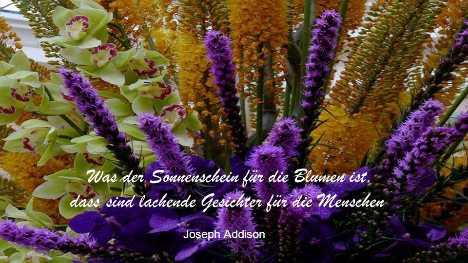 Wenn Blumen, gleichgültig welcher Farben und Formen, zusammenstehen, kann niemals ein Bild der Disharmonie entstehen.