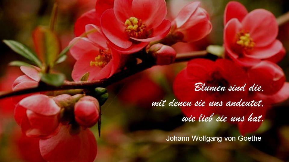 Blumen sind die, mit denen sie uns andeutet, wie lieb sie uns hat. Johann Wolfgang von Goethe