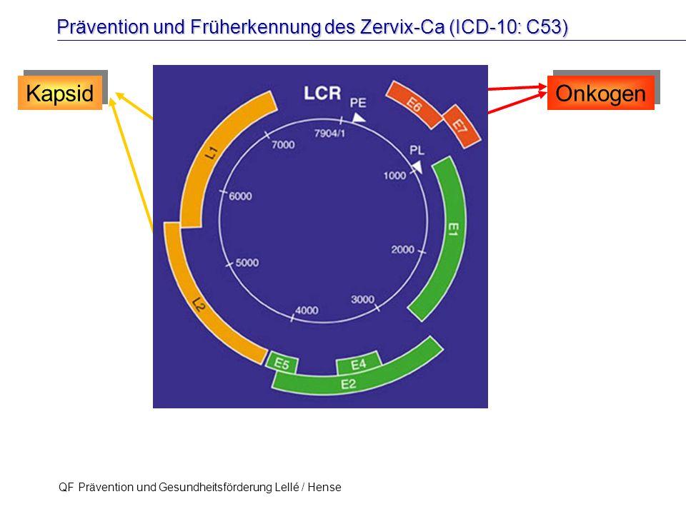 Prävention und Früherkennung des Zervix-Ca (ICD-10: C53) QF Prävention und Gesundheitsförderung Lellé / Hense 25 Kapsid Onkogen K. Rensing