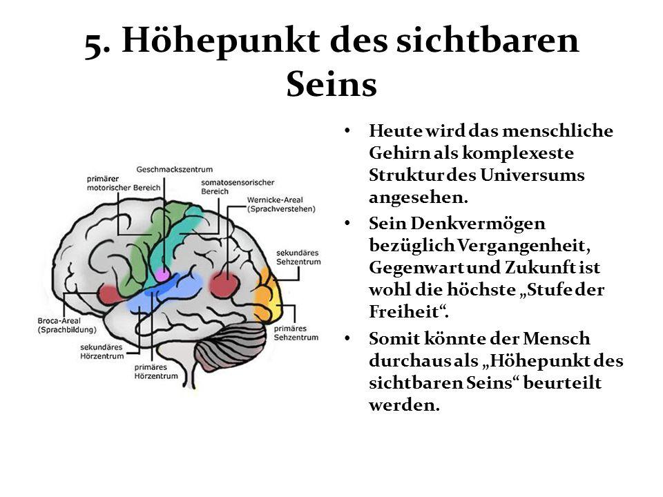 5. Höhepunkt des sichtbaren Seins Heute wird das menschliche Gehirn als komplexeste Struktur des Universums angesehen. Sein Denkvermögen bezüglich Ver
