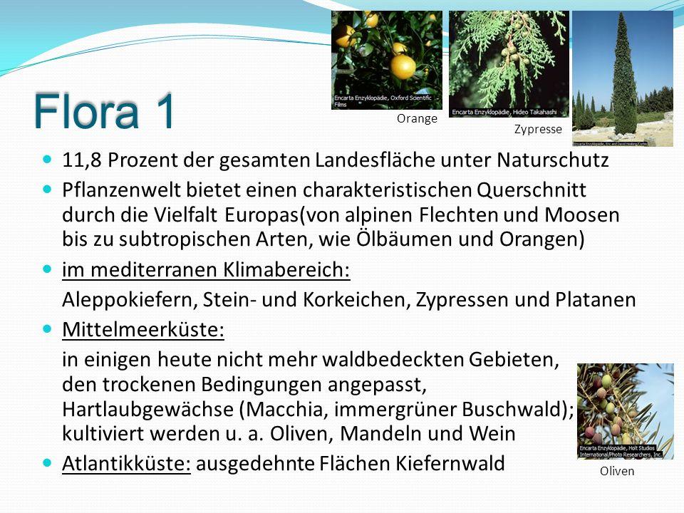 Flora 1 11,8 Prozent der gesamten Landesfläche unter Naturschutz Pflanzenwelt bietet einen charakteristischen Querschnitt durch die Vielfalt Europas(v