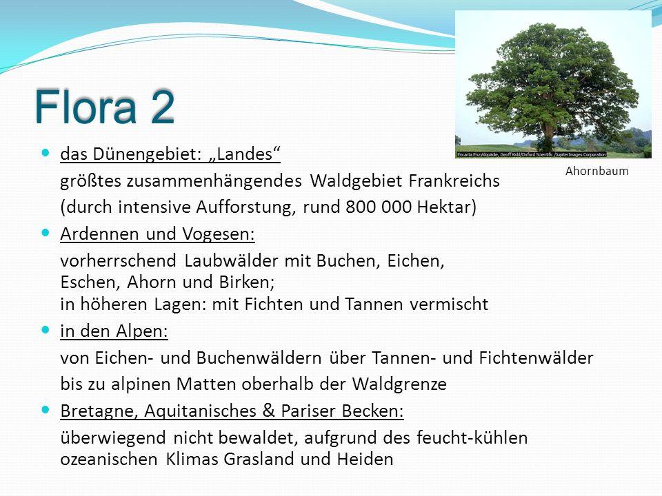 """Flora 2 das Dünengebiet: """"Landes"""" größtes zusammenhängendes Waldgebiet Frankreichs (durch intensive Aufforstung, rund 800 000 Hektar) Ardennen und Vog"""