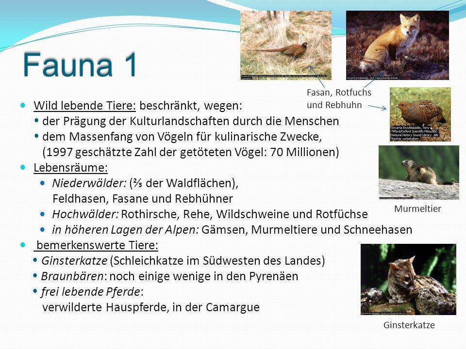 Fauna 1 Wild lebende Tiere: beschränkt, wegen:  der Prägung der Kulturlandschaften durch die Menschen  dem Massenfang von Vögeln für kulinarische Zw