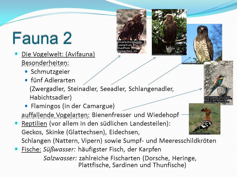 Fauna 2 Die Vogelwelt: (Avifauna) Besonderheiten: Schmutzgeier fünf Adlerarten (Zwergadler, Steinadler, Seeadler, Schlangenadler, Habichtsadler) Flami