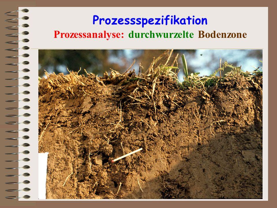 Prozessspezifikation Prozessanalyse: durchwurzelte Bodenzone