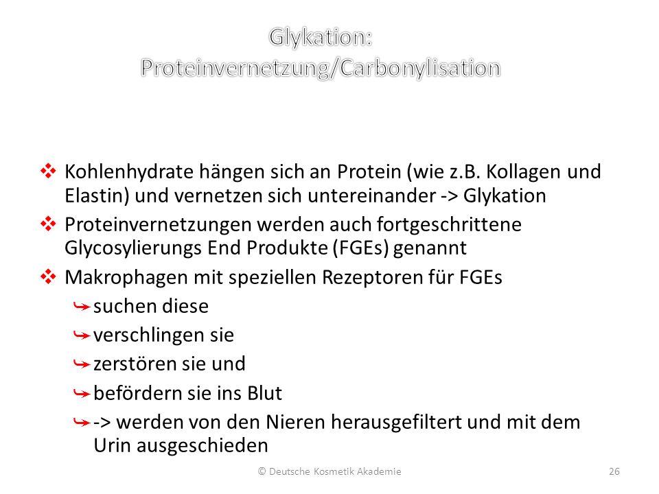 ❖ Kohlenhydrate hängen sich an Protein (wie z.B. Kollagen und Elastin) und vernetzen sich untereinander -> Glykation ❖ Proteinvernetzungen werden auch