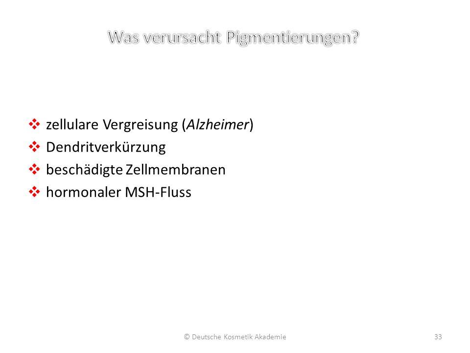 ❖ zellulare Vergreisung (Alzheimer) ❖ Dendritverkürzung ❖ beschädigte Zellmembranen ❖ hormonaler MSH-Fluss © Deutsche Kosmetik Akademie33