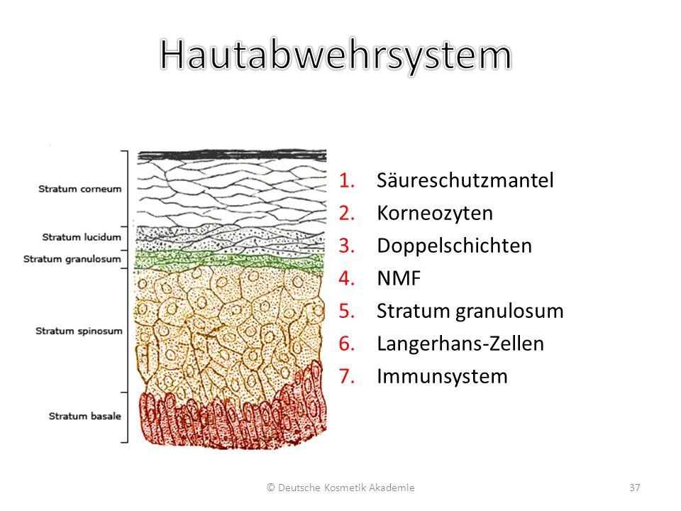 1.Säureschutzmantel 2.Korneozyten 3.Doppelschichten 4.NMF 5.Stratum granulosum 6.Langerhans-Zellen 7.Immunsystem © Deutsche Kosmetik Akademie37
