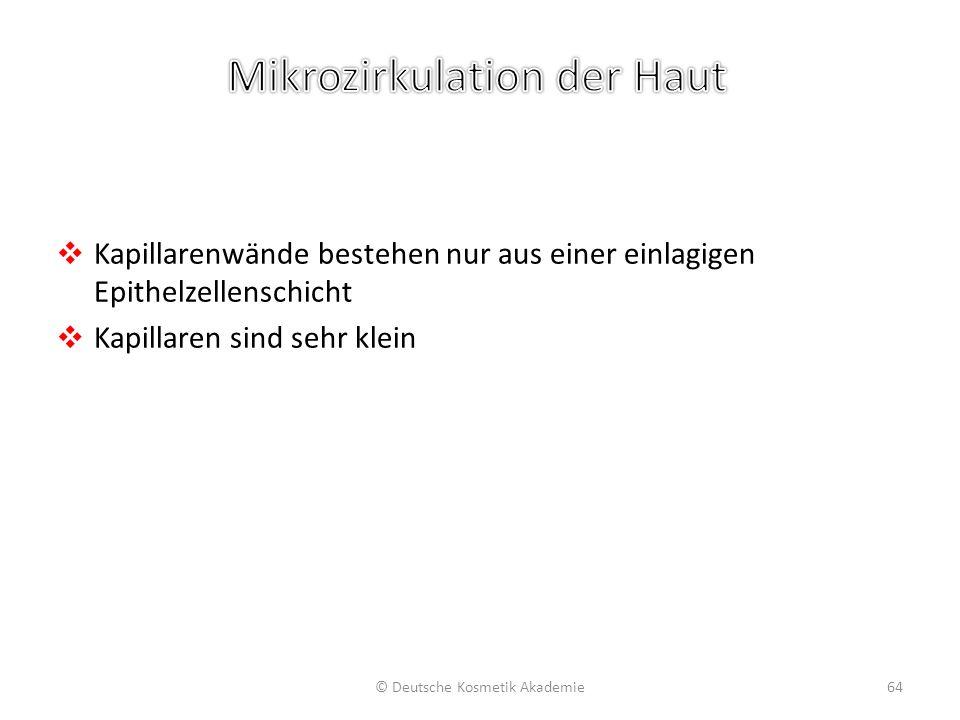 ❖ Kapillarenwände bestehen nur aus einer einlagigen Epithelzellenschicht ❖ Kapillaren sind sehr klein © Deutsche Kosmetik Akademie64