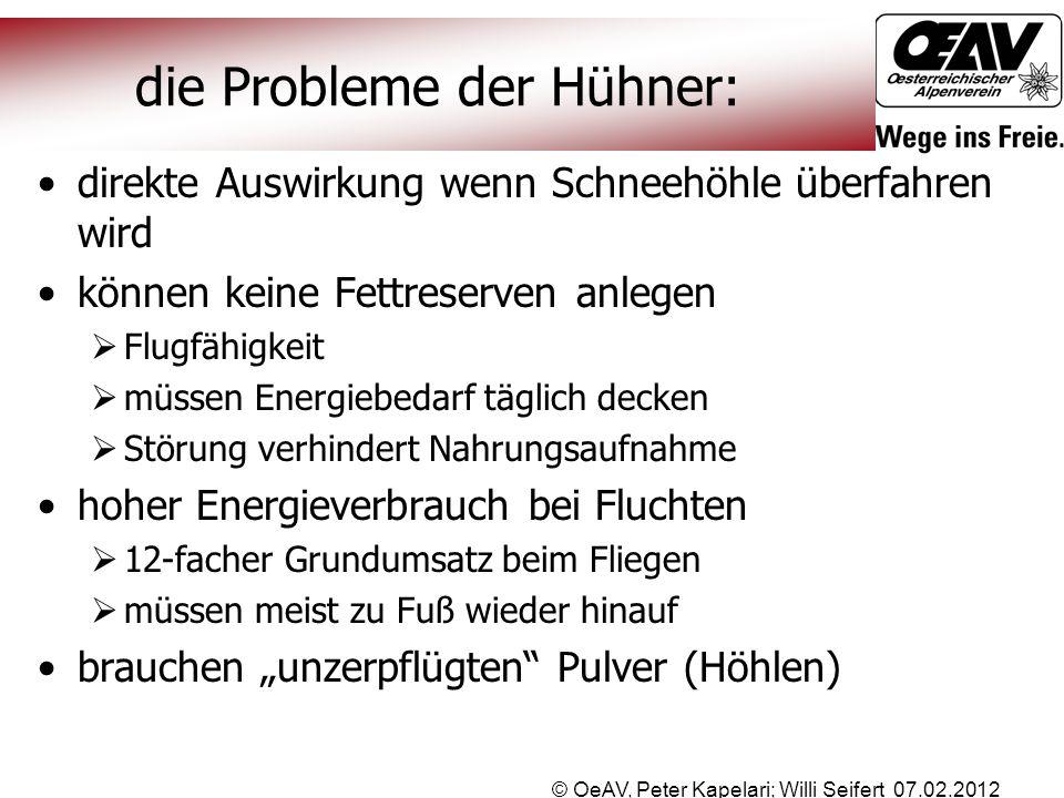 © OeAV, Peter Kapelari; Willi Seifert 07.02.2012 die Probleme der Hühner: direkte Auswirkung wenn Schneehöhle überfahren wird können keine Fettreserve
