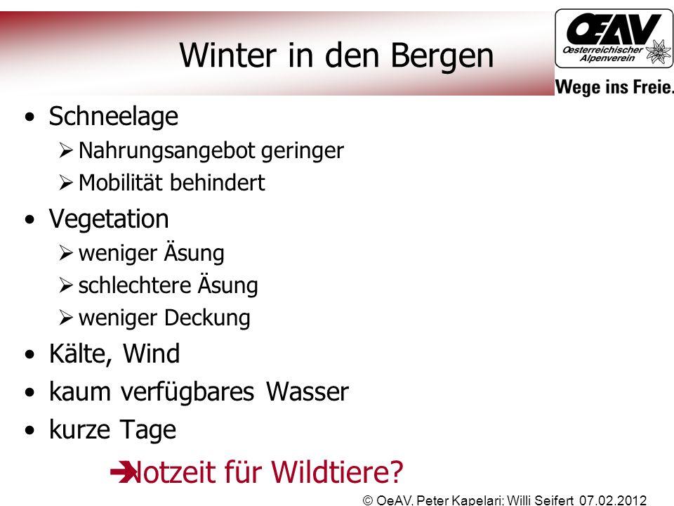 Winter in den Bergen © OeAV, Peter Kapelari; Willi Seifert 07.02.2012 Schneelage  Nahrungsangebot geringer  Mobilität behindert Vegetation  weniger