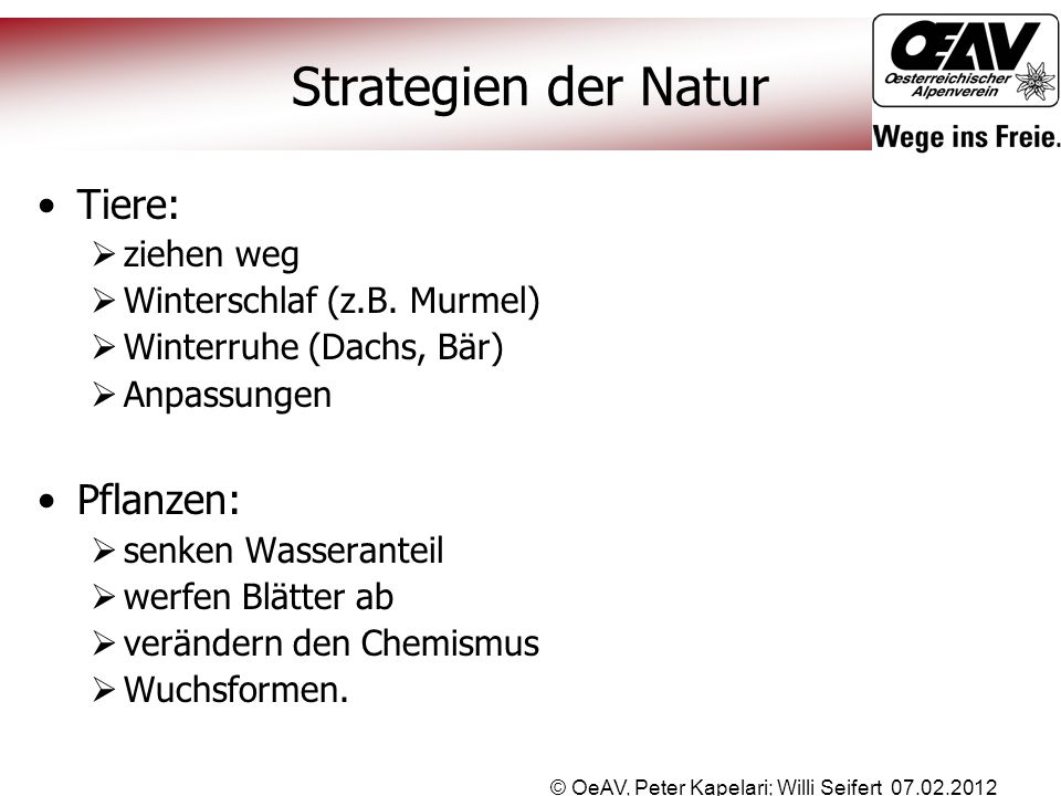 © OeAV, Peter Kapelari; Willi Seifert 07.02.2012 Strategien der Natur Tiere:  ziehen weg  Winterschlaf (z.B. Murmel)  Winterruhe (Dachs, Bär)  Anp