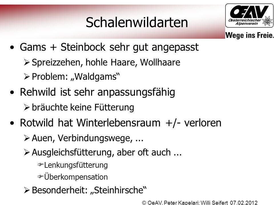 © OeAV, Peter Kapelari; Willi Seifert 07.02.2012 Schalenwildarten Gams + Steinbock sehr gut angepasst  Spreizzehen, hohle Haare, Wollhaare  Problem: