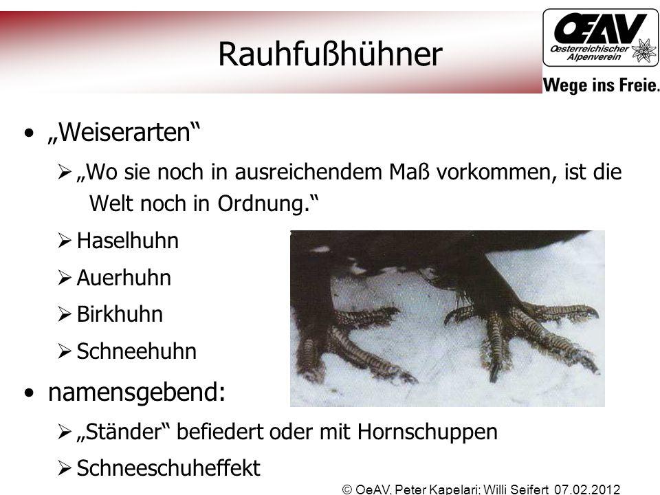"""© OeAV, Peter Kapelari; Willi Seifert 07.02.2012 Rauhfußhühner """"Weiserarten""""  """"Wo sie noch in ausreichendem Maß vorkommen, ist die Welt noch in Ordnu"""