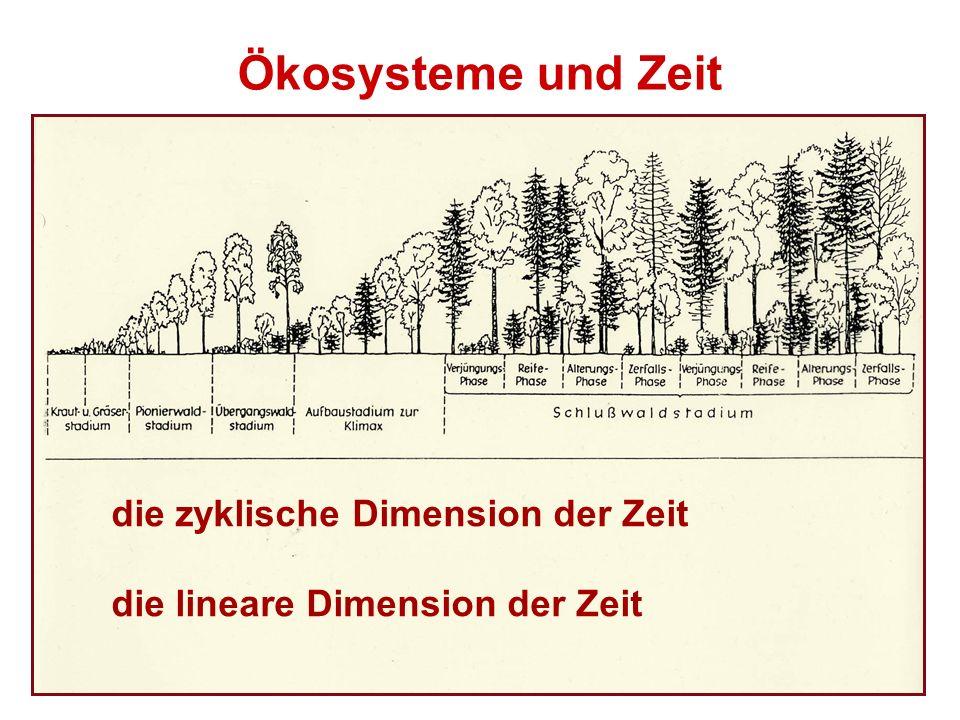 die zyklische Dimension der Zeit die lineare Dimension der Zeit Ökosysteme und Zeit