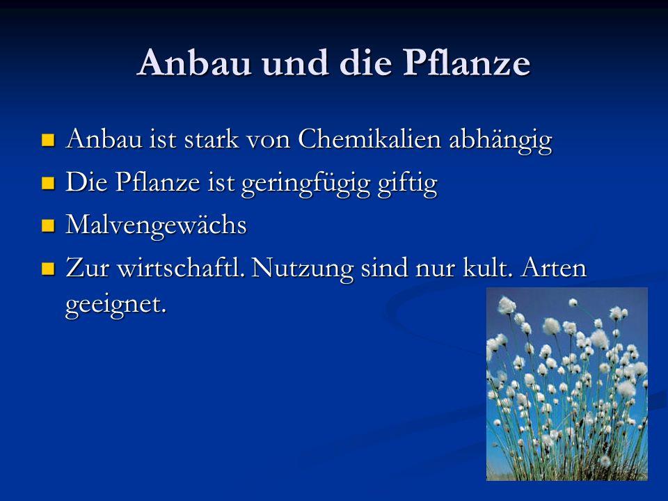 Anbau und die Pflanze Anbau ist stark von Chemikalien abhängig Anbau ist stark von Chemikalien abhängig Die Pflanze ist geringfügig giftig Die Pflanze