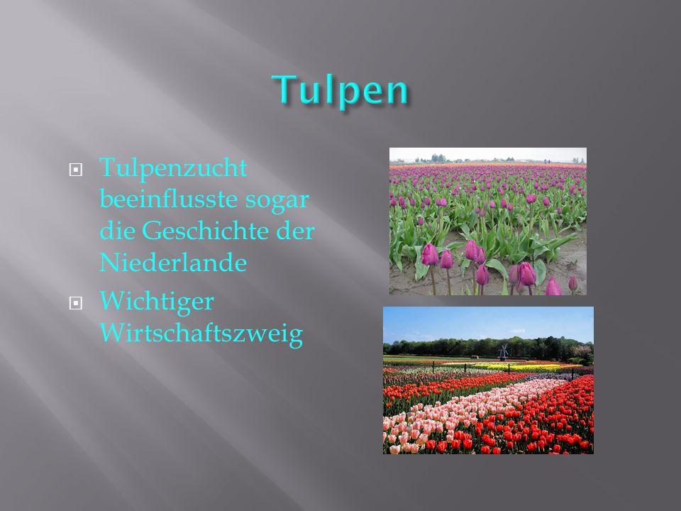  Tulpenzucht beeinflusste sogar die Geschichte der Niederlande  Wichtiger Wirtschaftszweig