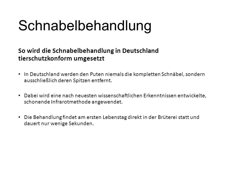 Schnabelbehandlung So wird die Schnabelbehandlung in Deutschland tierschutzkonform umgesetzt In Deutschland werden den Puten niemals die kompletten Schnäbel, sondern ausschließlich deren Spitzen entfernt.
