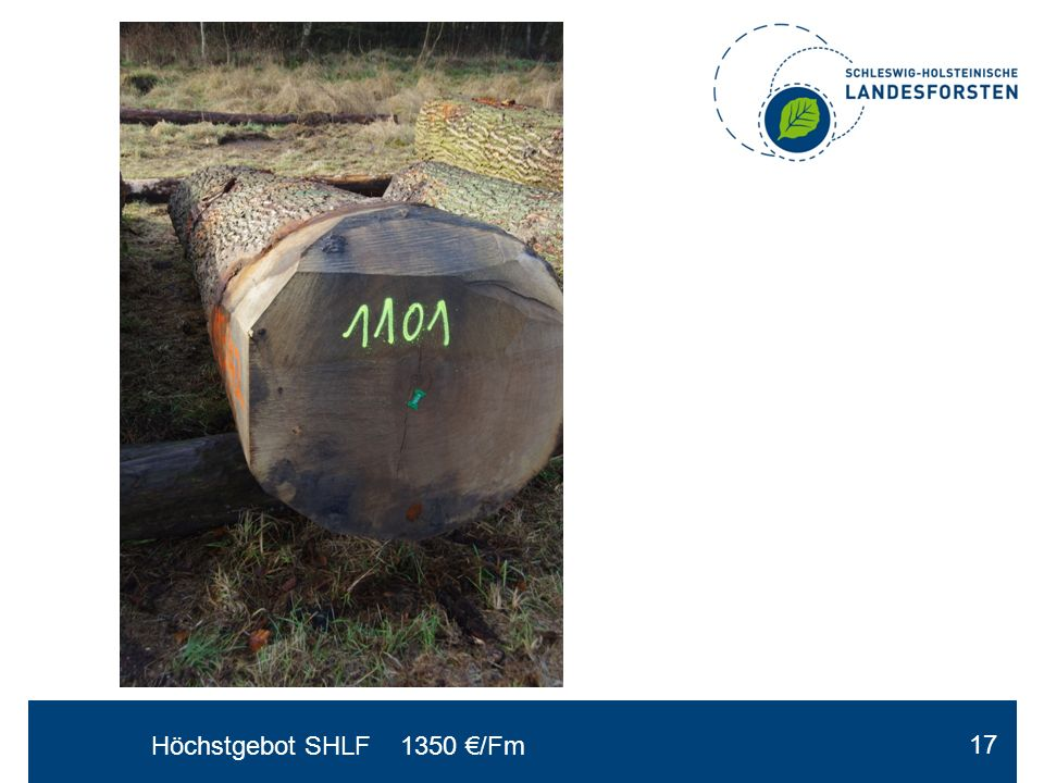 Höchstgebot SHLF 1350 €/Fm 17