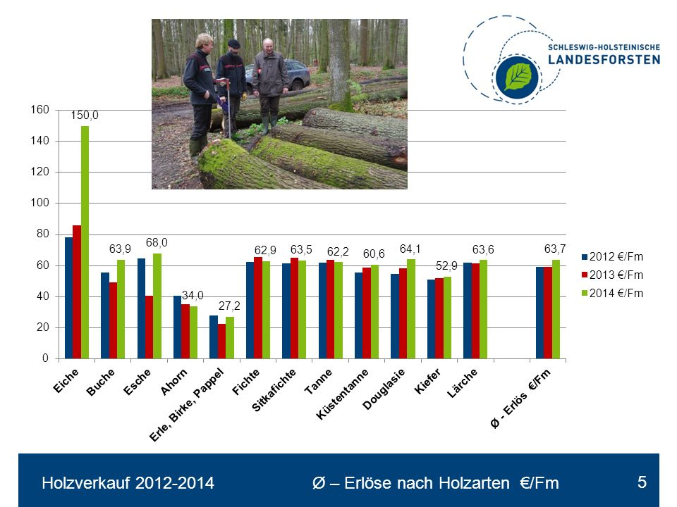 Holzeinschlag in % von Hauungsplan und Hiebssatz 16 in % %