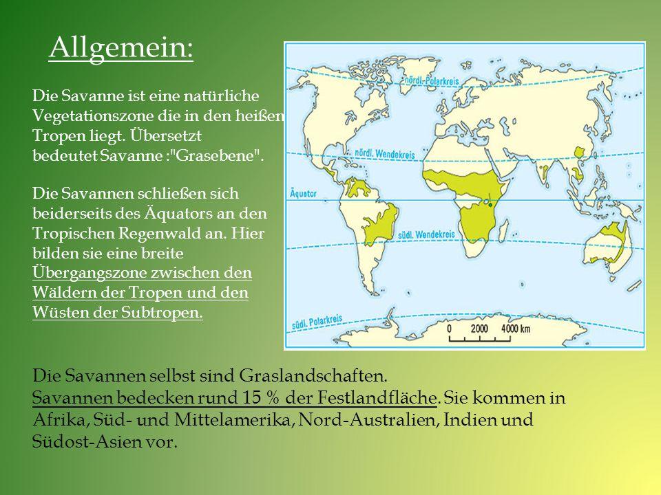 Die Savannen selbst sind Graslandschaften. Savannen bedecken rund 15 % der Festlandfläche. Sie kommen in Afrika, Süd- und Mittelamerika, Nord-Australi