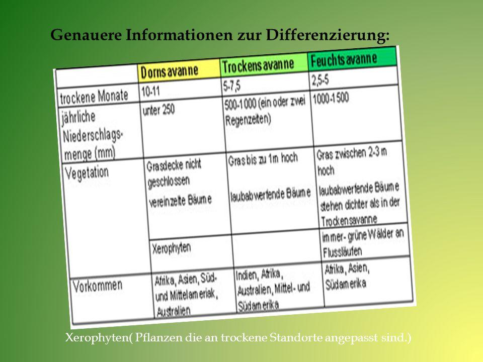 Genauere Informationen zur Differenzierung: Xerophyten( Pflanzen die an trockene Standorte angepasst sind.)