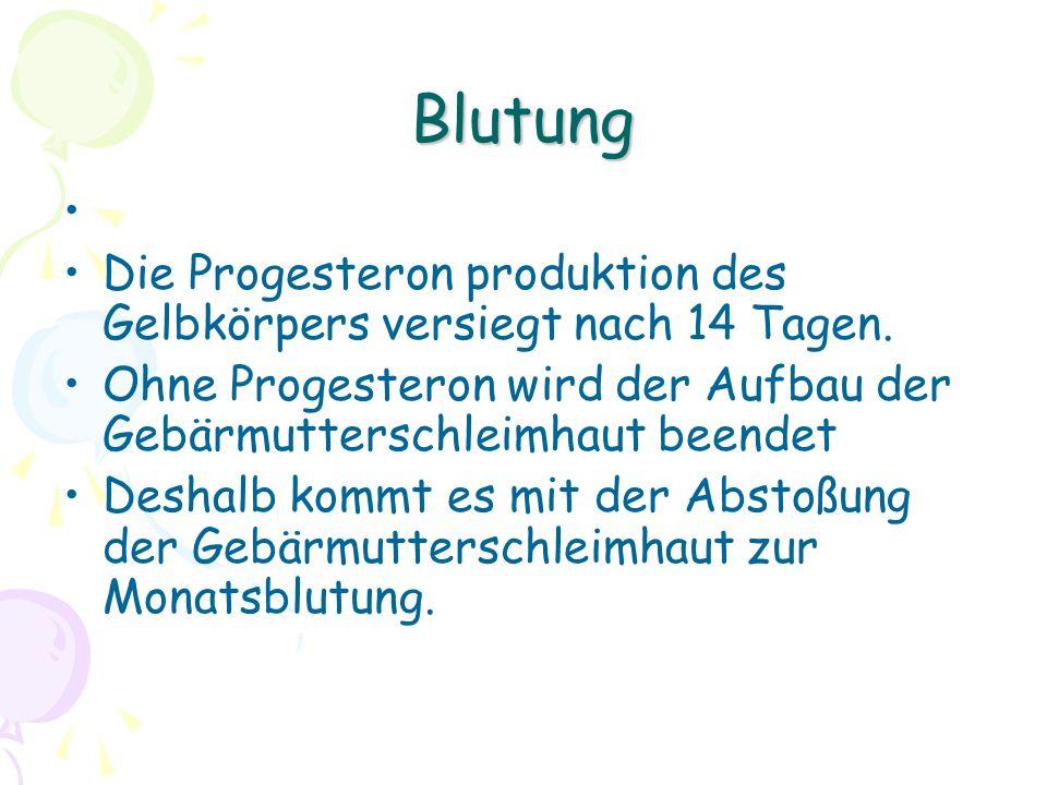 Blutung Die Progesteron produktion des Gelbkörpers versiegt nach 14 Tagen.