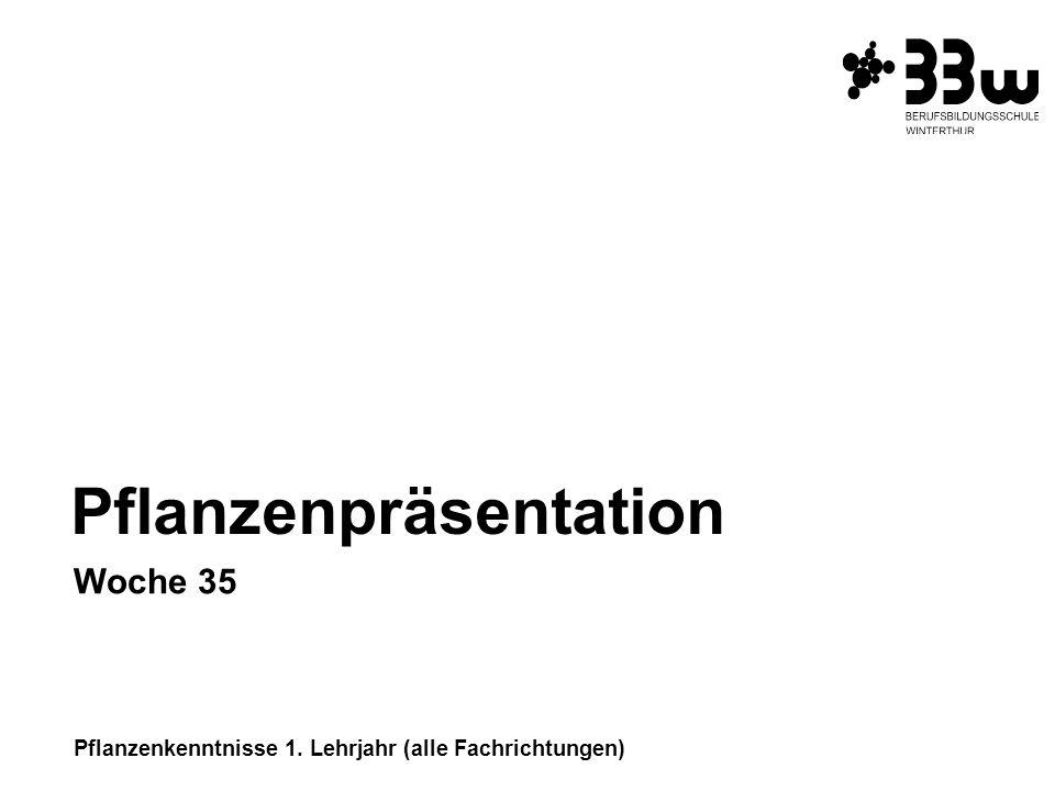 Pflanzenkenntnisse 1. Lehrjahr (alle Fachrichtungen) Pflanzenpräsentation Woche 35