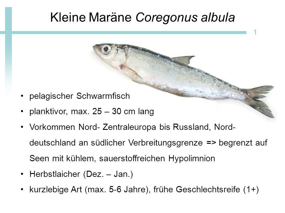 Bewirtschaftung 2 Fang mit pelagischen Kiemennetzen (18 – 26 mm) Hauptfangsaison von Mai - Oktober Direktvermarktung als Brat- oder Räucherfisch 13 - 16 € / kg Hauptwirtschaftsfischart in entsprechenden Seen
