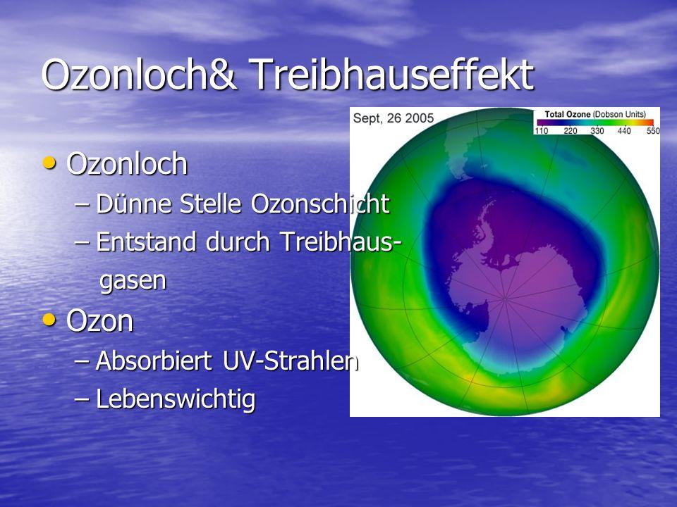 Ozonloch& Treibhauseffekt Ozonloch Ozonloch –Dünne Stelle Ozonschicht –Entstand durch Treibhaus- gasen gasen Ozon Ozon –Absorbiert UV-Strahlen –Lebens