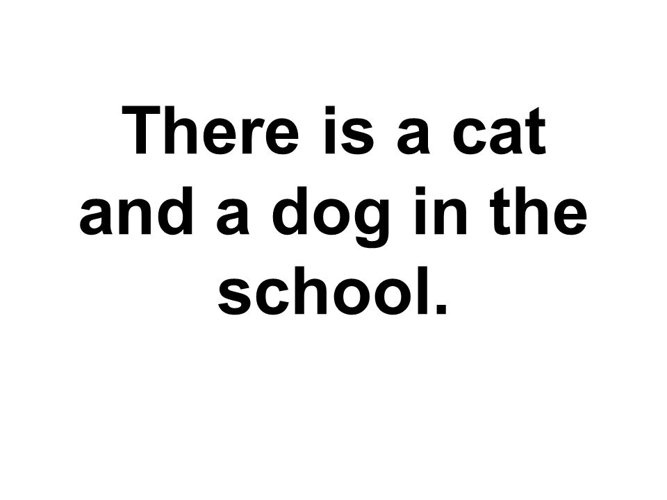 There is a cat and a dog in the school.
