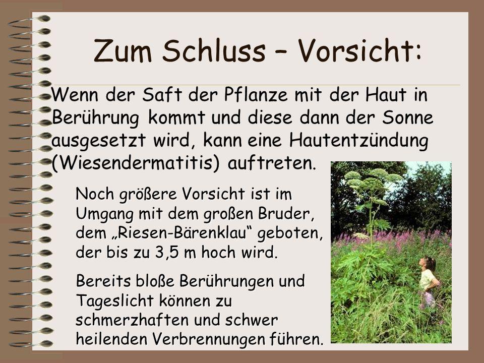 Zum Schluss – Vorsicht: Wenn der Saft der Pflanze mit der Haut in Berührung kommt und diese dann der Sonne ausgesetzt wird, kann eine Hautentzündung (