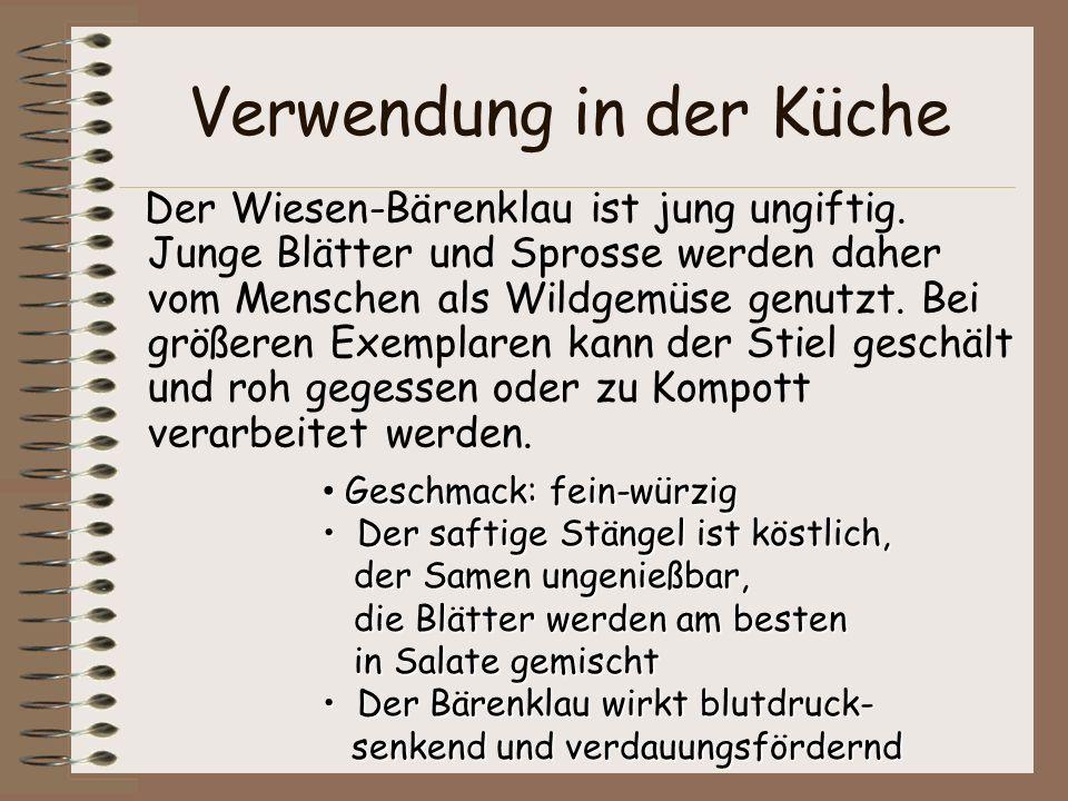Verwendung in der Küche Der Wiesen-Bärenklau ist jung ungiftig. Junge Blätter und Sprosse werden daher vom Menschen als Wildgemüse genutzt. Bei größer