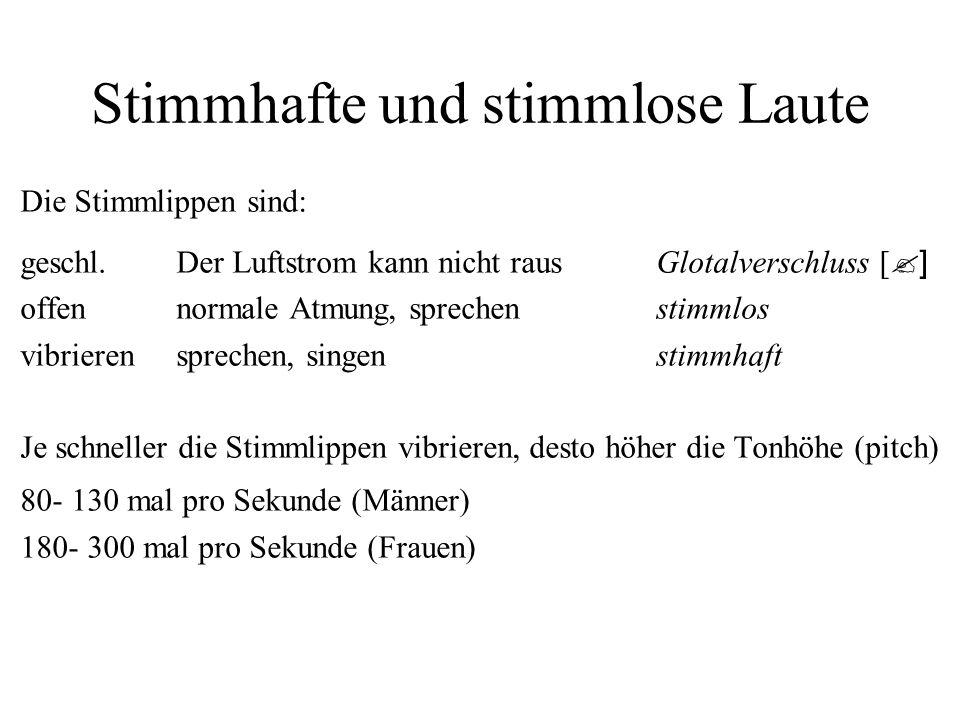 Stimmhafte und stimmlose Laute Die Stimmlippen sind: geschl.