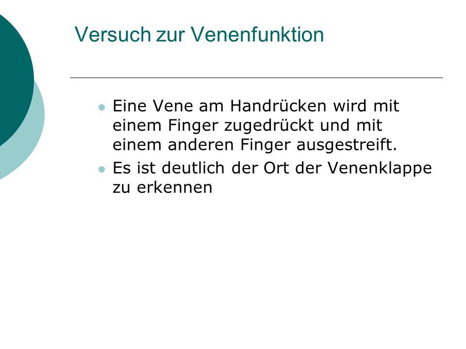 Versuch zur Venenfunktion Eine Vene am Handrücken wird mit einem Finger zugedrückt und mit einem anderen Finger ausgestreift. Es ist deutlich der Ort