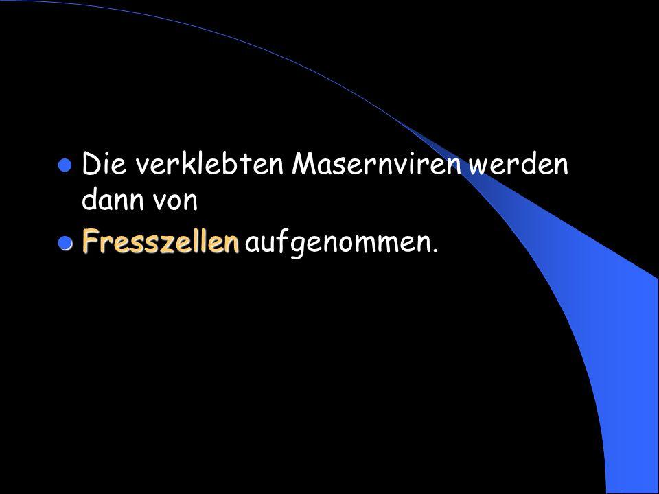 Die verklebten Masernviren werden dann von Fresszellen Fresszellen aufgenommen.