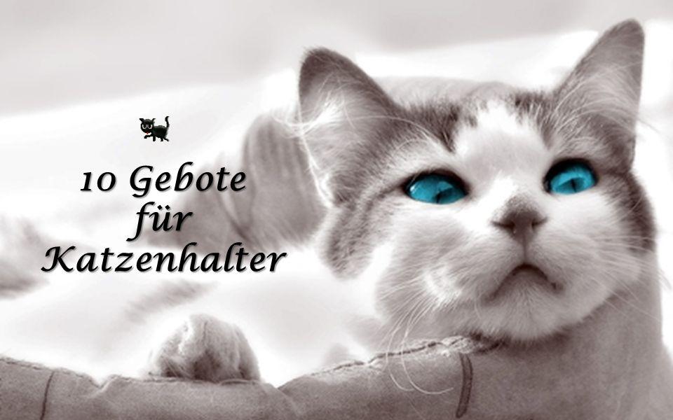 10 Gebote für Katzenhalter