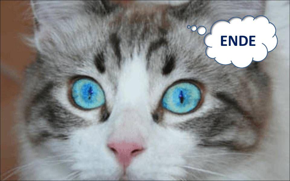 Du sollst deiner Katze ein tierisch gutes Leben bereiten! 10.