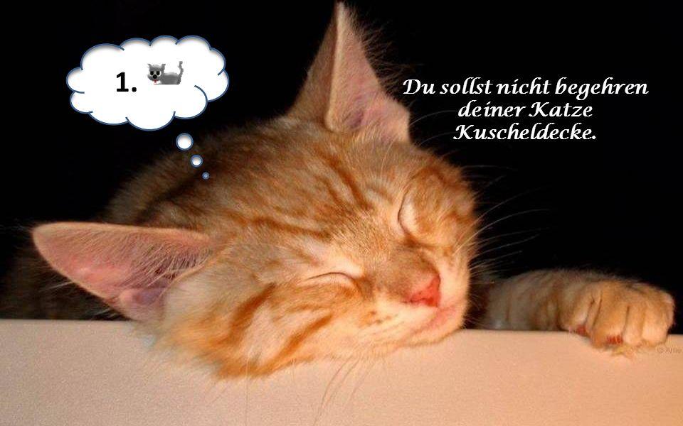 Du sollst nicht begehren deiner Katze Kuscheldecke. 1.