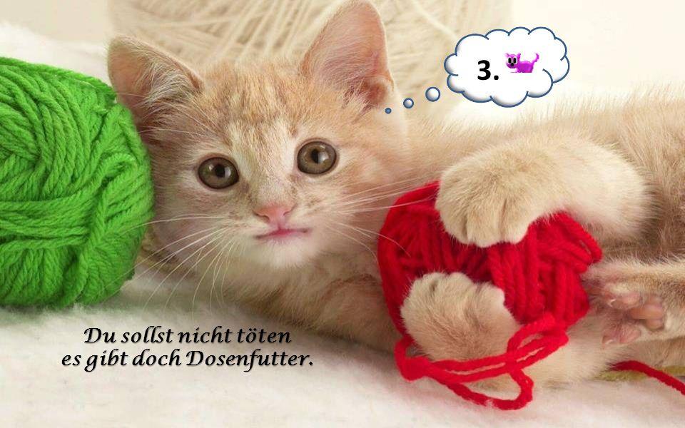 Du sollst deiner Katze jeden Wunsch erfüllen. 2.