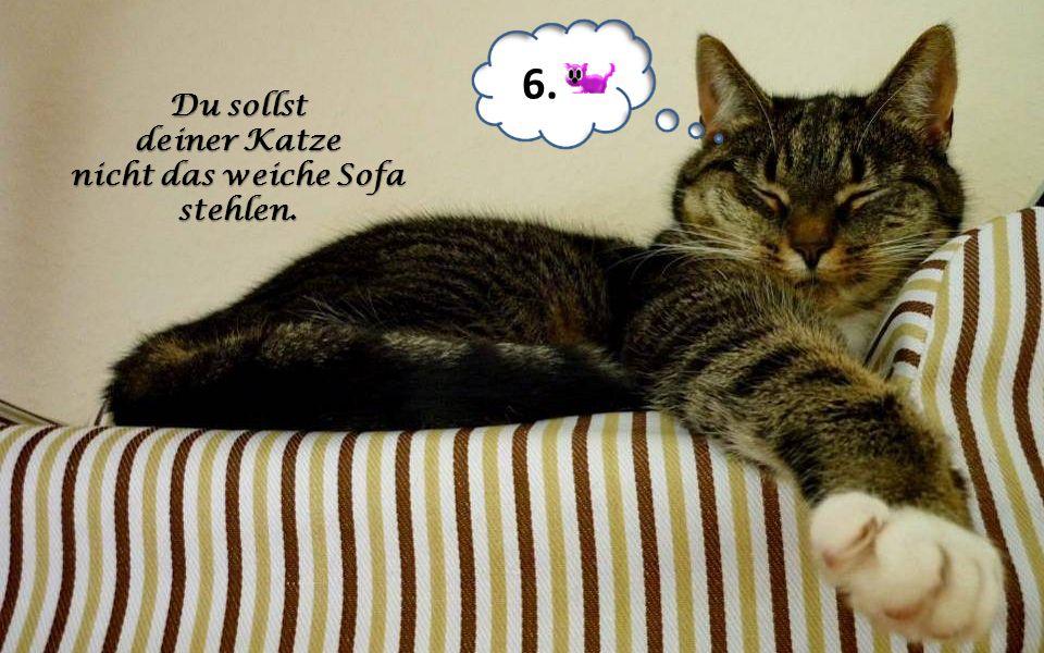 Du sollst deiner Katze nicht das weiche Sofa stehlen. 6.